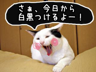 Shirokuro0710_1