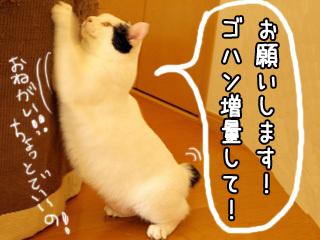 Shirokuro0710_4