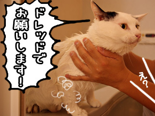 Shirokuro0710_8