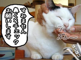 Shirokuro0711_5