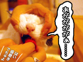 Shirokuro0711_7