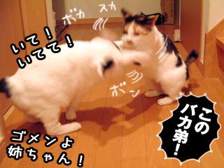 Shirokuro0712_2