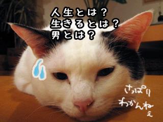 Shirokuro0712_3