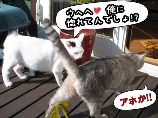 Shirokuro0712_9