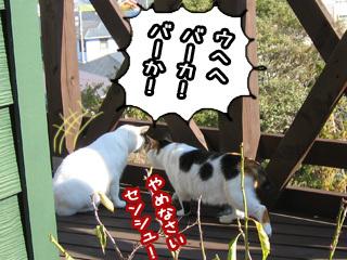Shirokuro0801_7