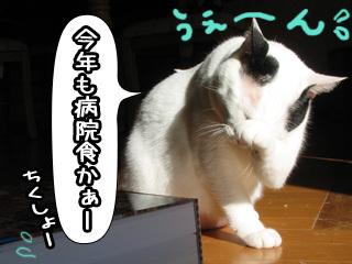 Shirokuro0801_9