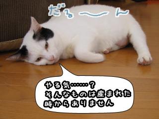 Shirokuro0802_7