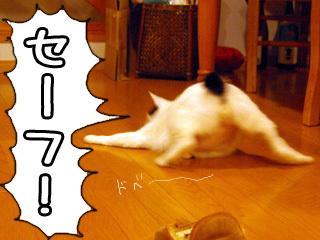 Shirokuro0802_9
