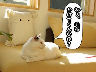 Shirokuro0803_10