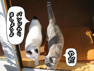Shirokuro0804_2