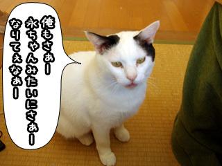 Shirokuro0804_5