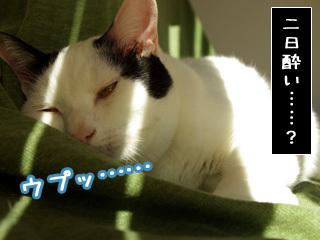Shirokuro0804_6