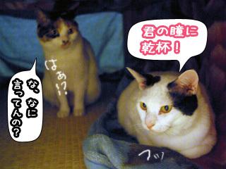 Shirokuro0805_11