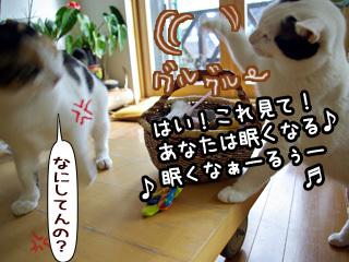 Shirokuro0805_5