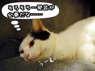 Shirokuro0805_6