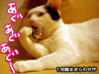 Shirokuro0806_1
