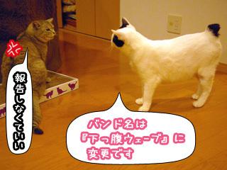 Shirokuro0806_5