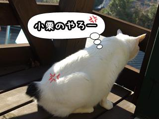 Shirokuro0806_6