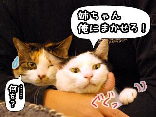 Shirokuro0806_8