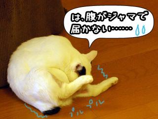Shirokuro0806_9