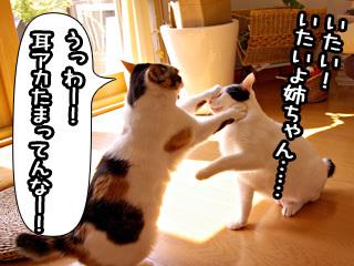 Shirokuro0807_5