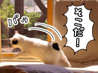 Shirokuro0807_8