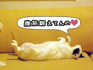 Shirokuro0808_3