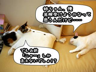 Shirokuro0808_7