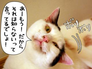 Shirokuro0808_10