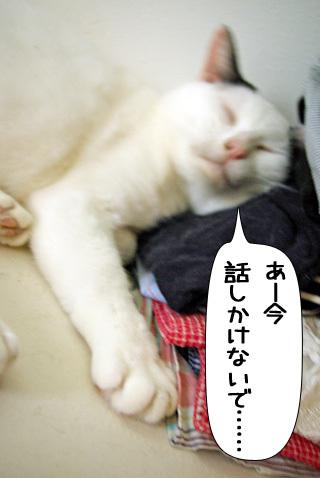 Shirokuro0808_4