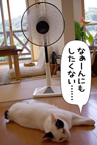 Shirokuro0808_8