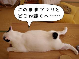 Shirokuro0810_8