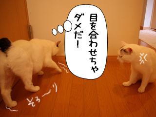 Shirokuro0811_10