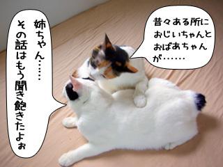 Shirokuro0811_11