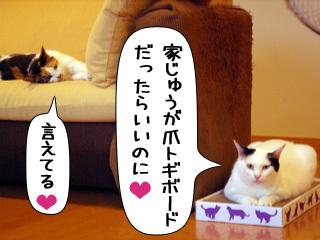 Shirokuro0811_12