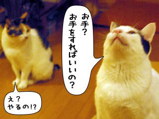 Shirokuro0811_4
