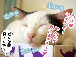 Shirokuro0811_6