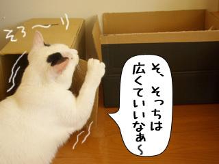 Shirokuro0811_7