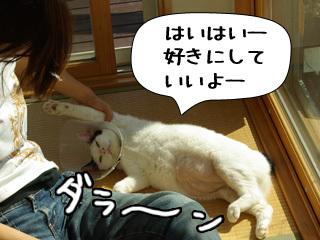 Shirokuro0812_1