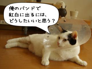 Shirokuro0812_11