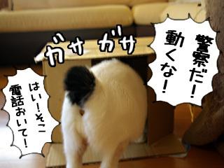 Shirokuro0812_2