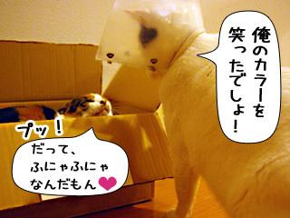 Shirokuro0812_4