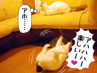 Shirokuro0812_5