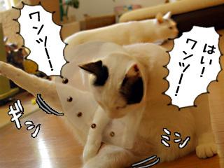 Shirokuro0812_6