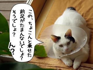 Shirokuro0812_8