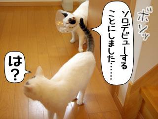 Shirokuro0812_9