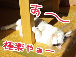 Shirokuro0901_11