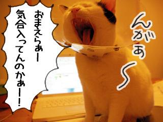 Shirokuro0901_3