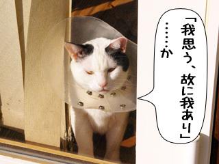 Shirokuro0901_6
