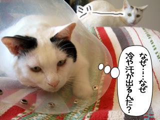 Shirokuro0902_1